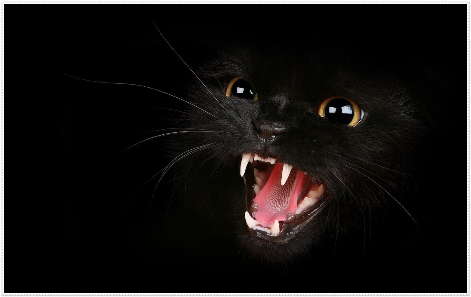 Gambar Kartun Muka Kucing Gokil Abis