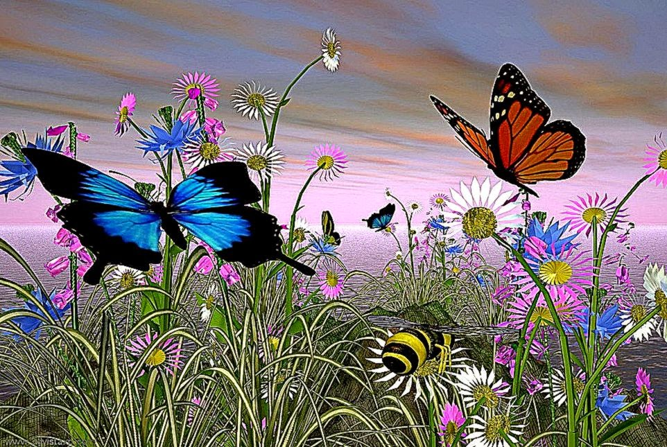 Animated Butterflies   Free HD Wallpapers