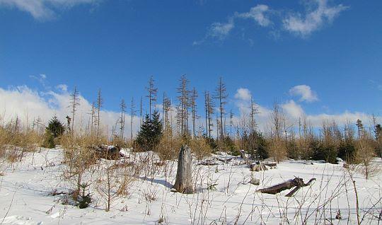 Las po wichurze w 2004 roku i pożarze w 2013 roku.