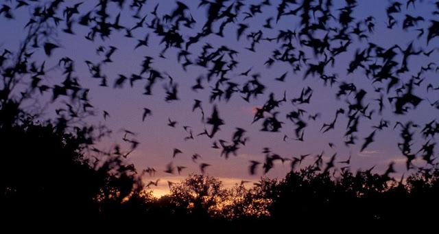Murcielagos en la oscuridad