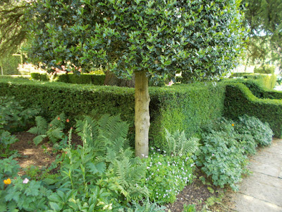 Pleached holly with underplanting Inspiring ideas from Hidcote Green Fingered Blog