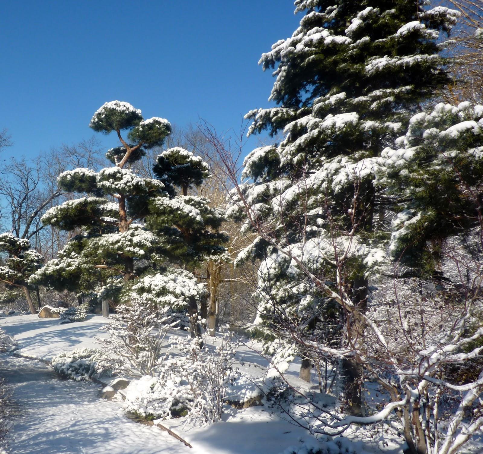 Garden Of Reflection: Winter In Anderson Japanese Gardens