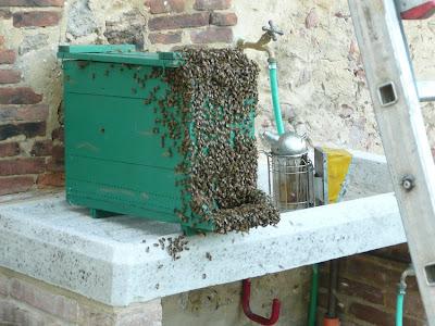 sciame api arnia affumicatore