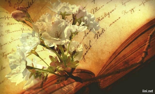 ảnh hoa trắng và cuốn sách cũ