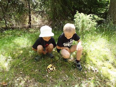 Grzyby wiosenne,grzyby w czerwcu, grzyby na Mazurach, gatunki maślaków, maślak ziarnisty Suillus granulatus, polówka popękana Agrocybe dura, stułka piaskowa Coltricia perennis, poziomki leśne, pierwsze poziomki