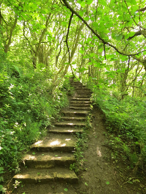 A set of narrow stone steps leading uphill between trees and bright green foliage.