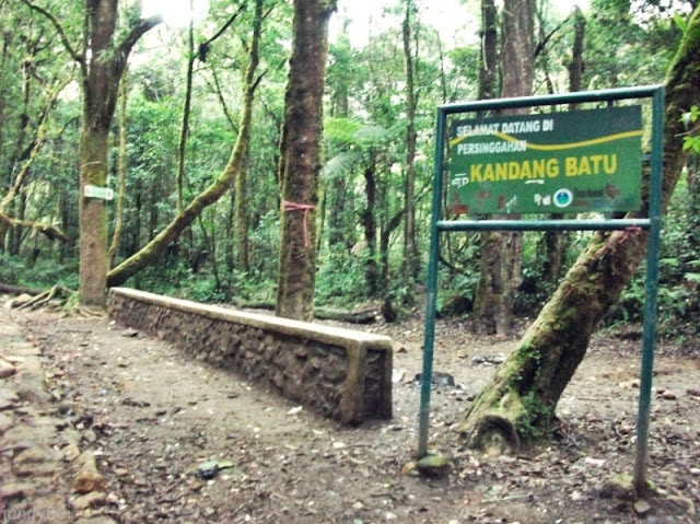 Pendakian Gunung Pangrango via Cibodas