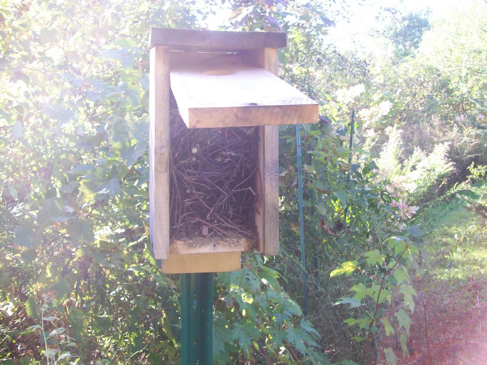 Woodwork Mourning Dove Nest Box PDF Plans