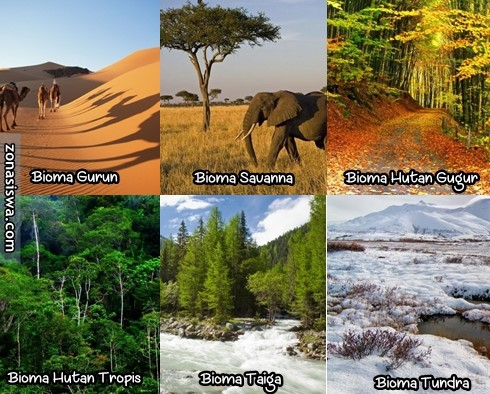 Jenis Bioma  Smart Geografi