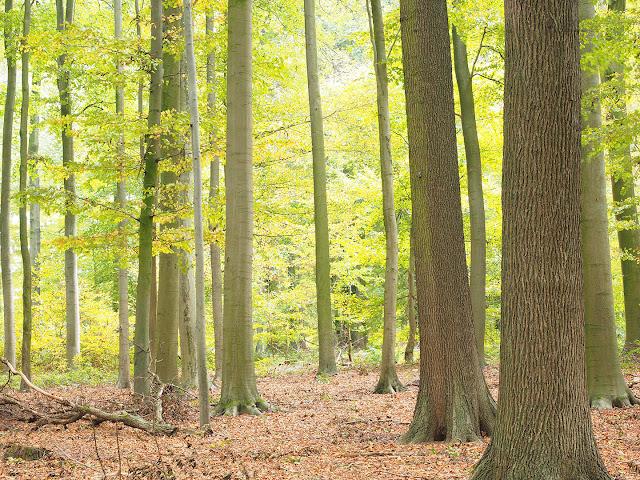 Herbstwald bei Leopoldshöhe