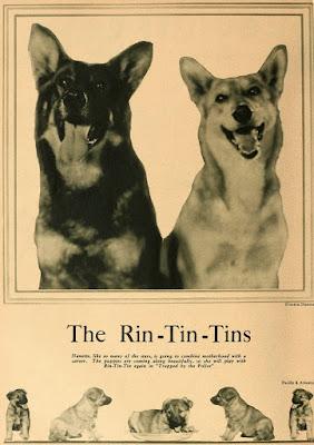 Rin-Tin-Tin Nanette