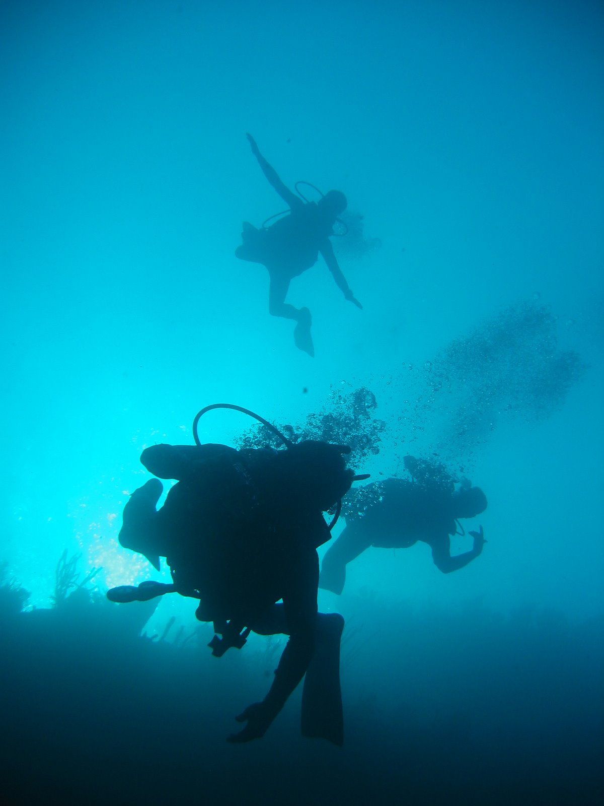 Daily Underwater Photo: Where to get your SCUBA certification