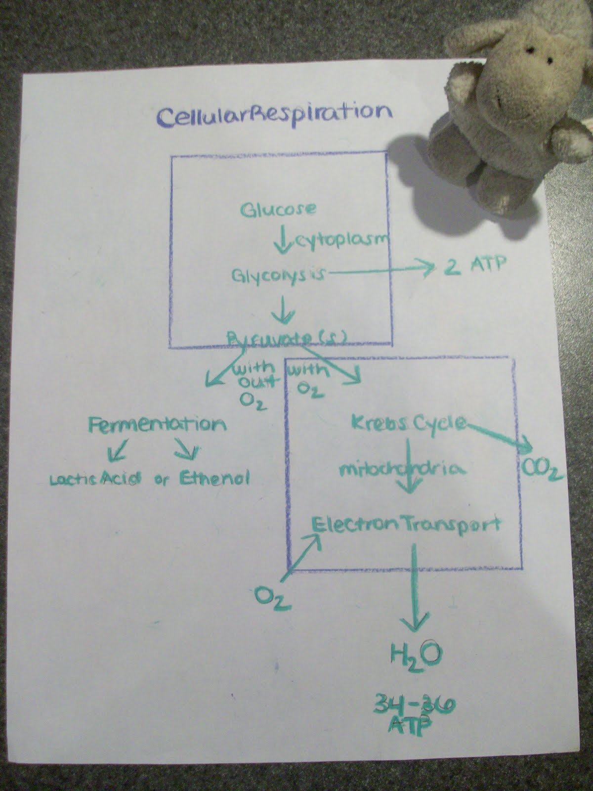 glycolysis and krebs cycle diagram 2 hp electric motor single phase wiring ap biology project cellular respiration