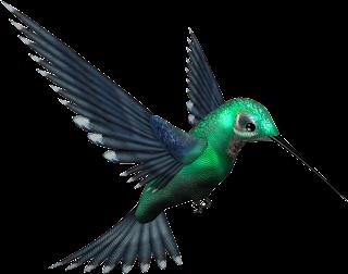 Google Kolibri - Sofőrszolgálat Bp