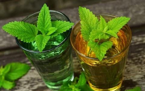A citromfű tea mire jó? Hogyan kell megfelelően elkészíteni?