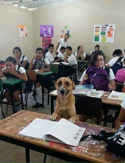 Esta maestra encontró un alumno muy especial para mantener a los demás atentos en clase