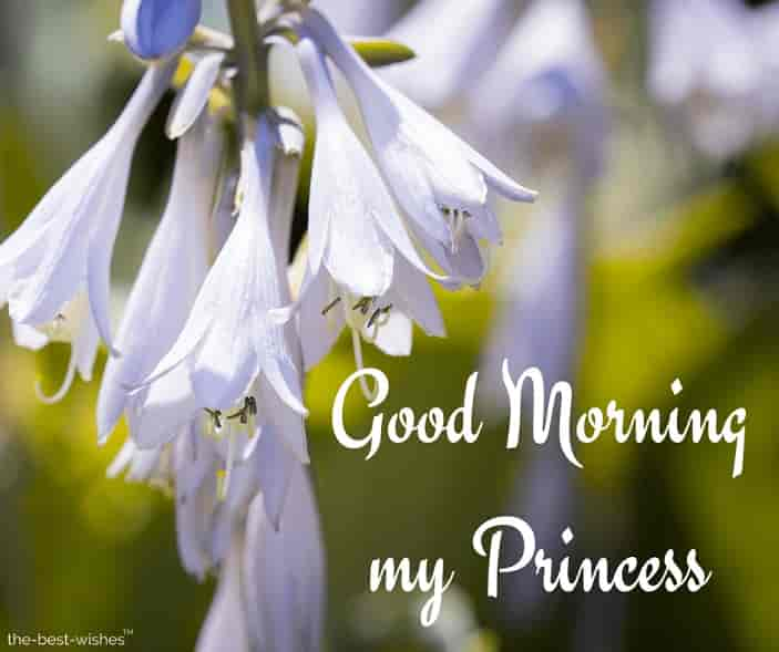 good morning my princess image