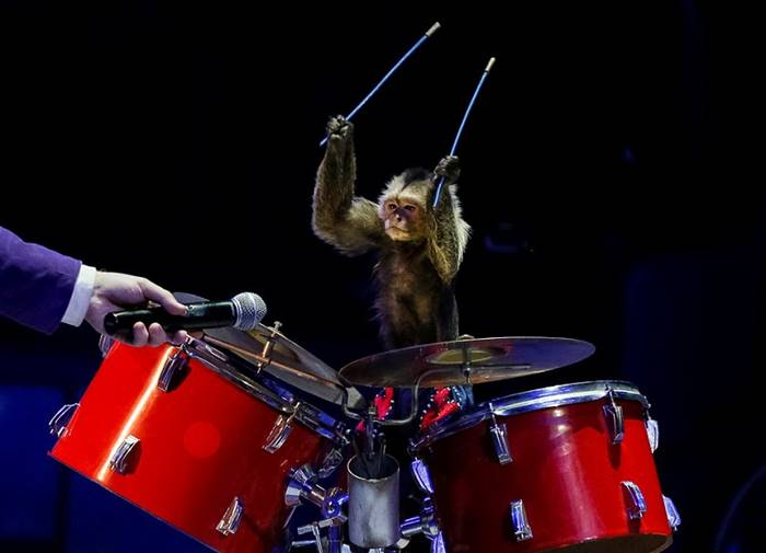 "Speech of monkeys drummers during the ""Show of the giant fountains"" Kiev circus. Ukraine, September 27. The author: Gleb Garanich"