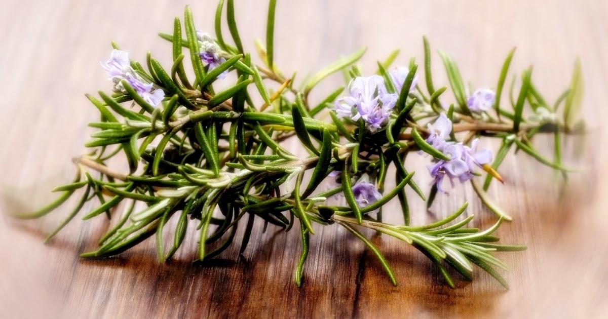 Белый чай – эликсир молодости и здоровья изоражения