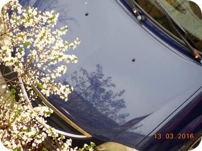 corcodusul oglindit in masina