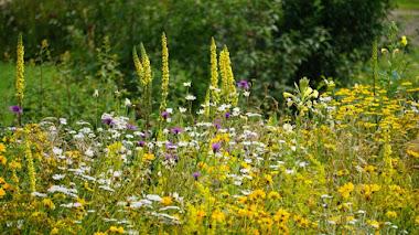 Praderas de flores en el jardín. Pictorial Meadows llega a España