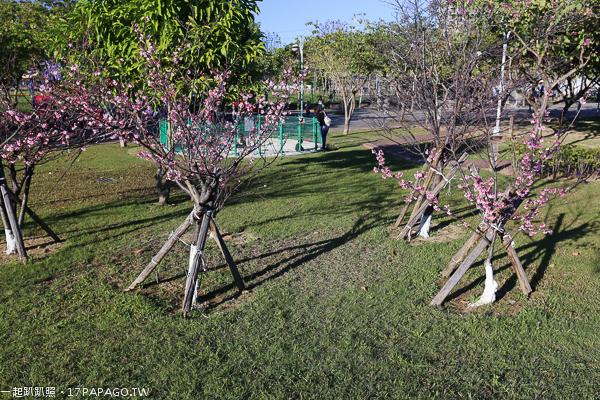 台中太平|麗園公園|沙坑|綠草坪|櫻緣道|賞櫻秘境|適合親子同遊的公園