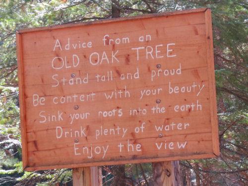 advice from an oak