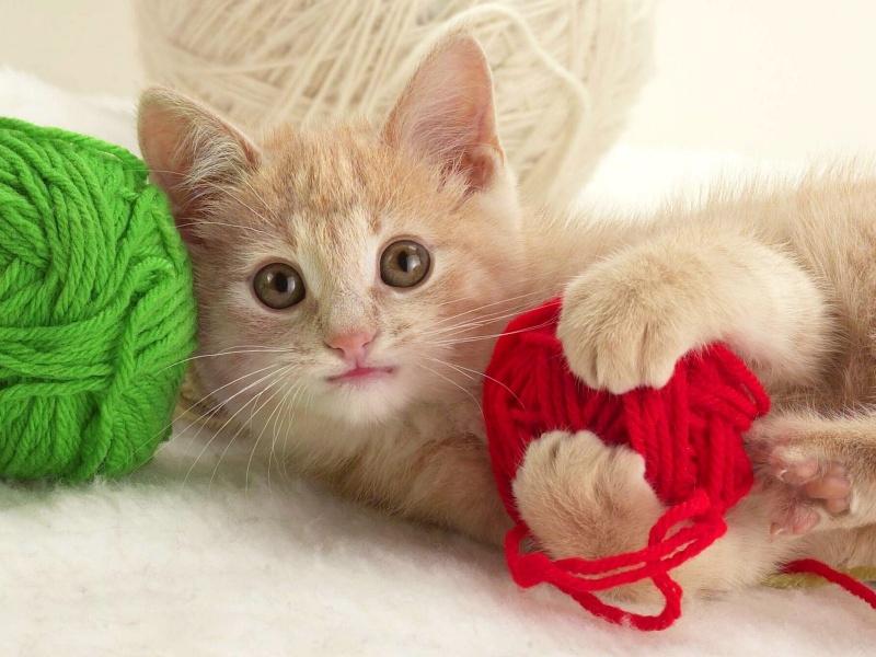 Free wallpaper cute kitten wallpaper - Cute kitten backgrounds for desktop ...