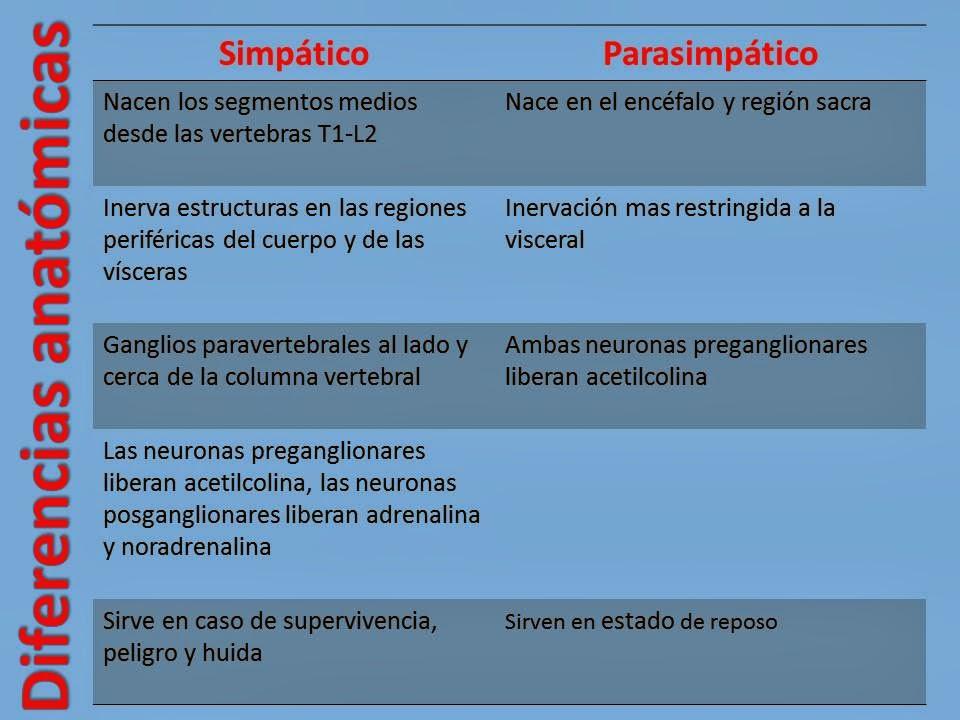 Blog De Fisiologia Basica De Martha Isela Castro Ayon Diferencias Anatómicas Y Funcionales Del Sistema Nervioso Simpático Y Parasimpático 8 De Noviembre De 2013