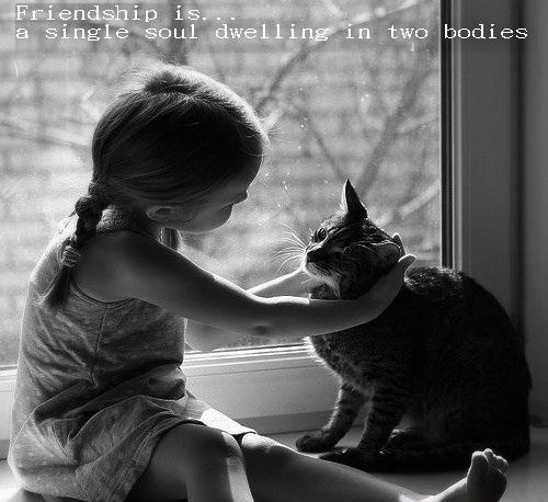 Senior Cat Quotes: Drama Queen: Cat's & Friendship Quotes