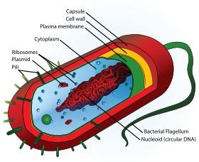 Rule of 6ix: Meningitis B and the future of vaccines
