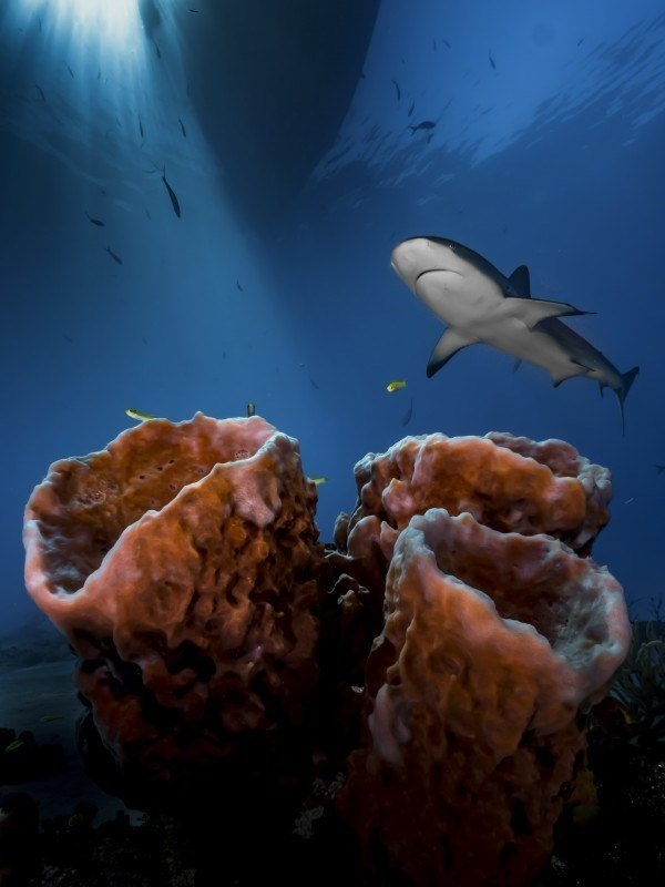 The Best Underwater Photos EVER Taken Show Life From A Different Angle. - Up And Coming Underwater Photographer Of The Year 2016 'Three Pillars – Practice, Patience & Luck!' by Pier Mane from South Africa