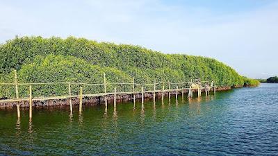 Hutan mangrove di Yogyakarta