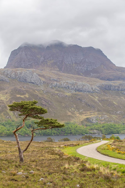 Lone Pine Loch Maree NC500 by Laurence Norah
