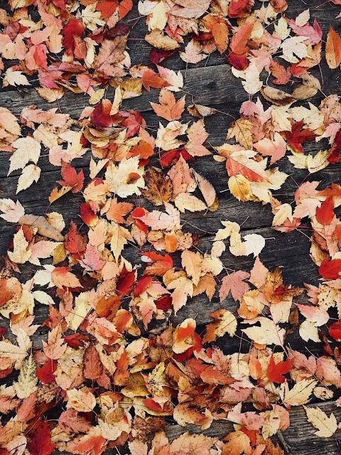 Autumn Tag! | BLOGTOBER 🍂☕🎃