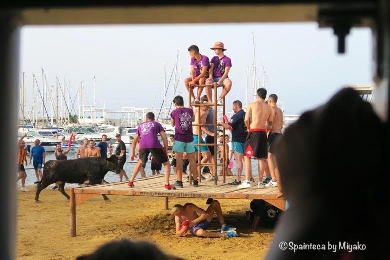 スペインの海の牛追い祭りで勢い走る牛と若者たち