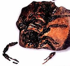 Pulmonoscorpius fossil