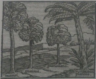 dibujo de arboles frutales mamey guayaba guanabana y platano