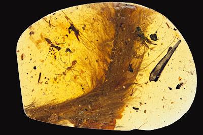 Rabo de dinossauro de 99 milhões de anos é descoberto em âmbar