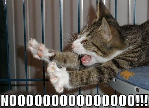 Nooooo: World Wildness Web: Noooo
