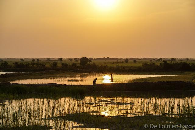 Rizières au soleil couchant - Phnom Krom - Siem Reap - Cambodge