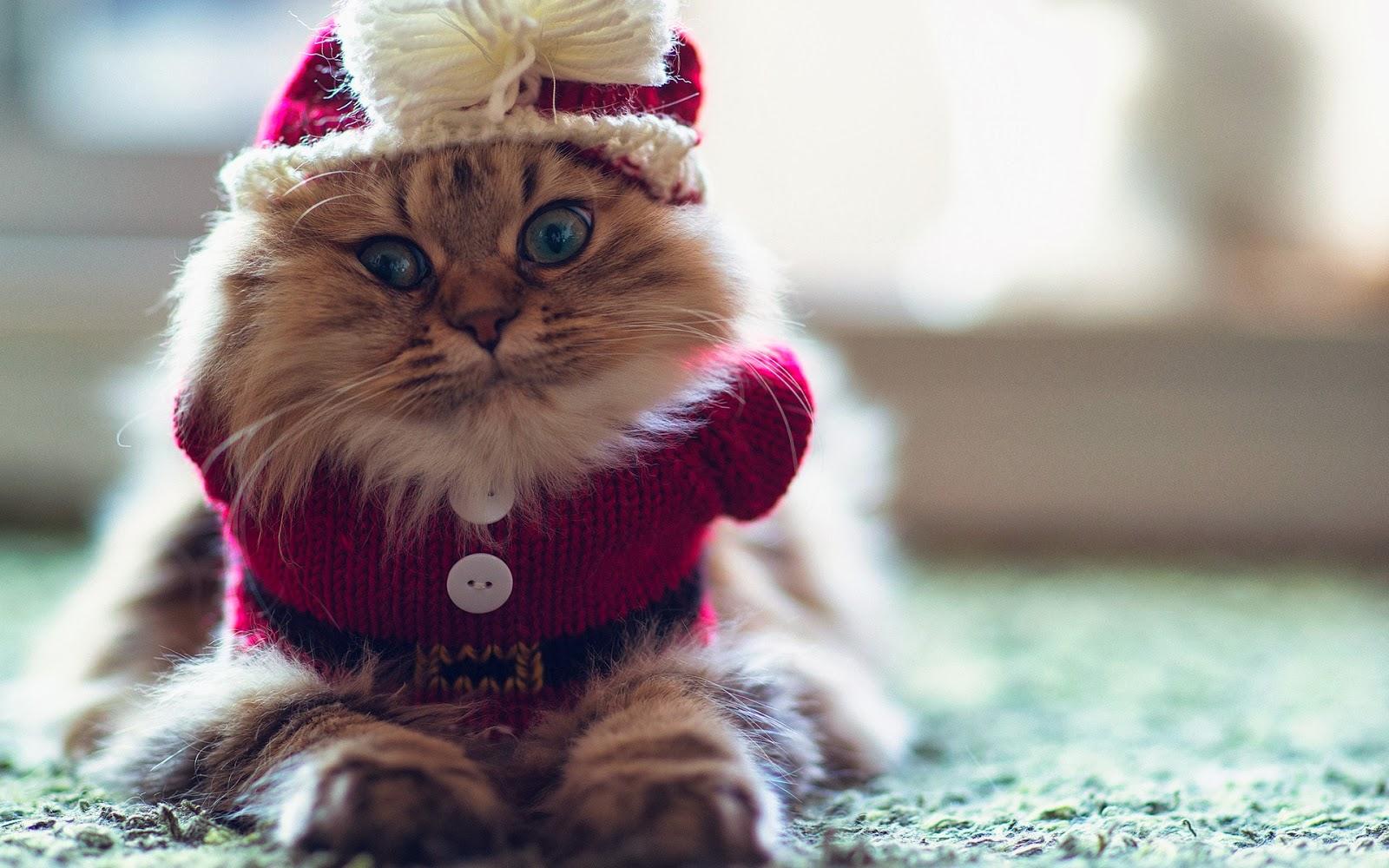 wallpaper-lucu-kucing-musim dingin-foto-lucu-wallpaper-1920x1200