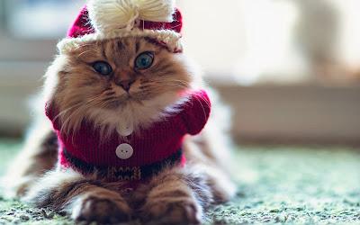 cute-cat-winter-photo-funny-wallpaper-1920x1200