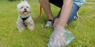 Πρόστιμο σε όσους δεν μαζεύουν τις ακαθαρσίες του σκύλου τους από δρόμους και πάρκα