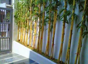 Jual bambu Panda di Bsd City