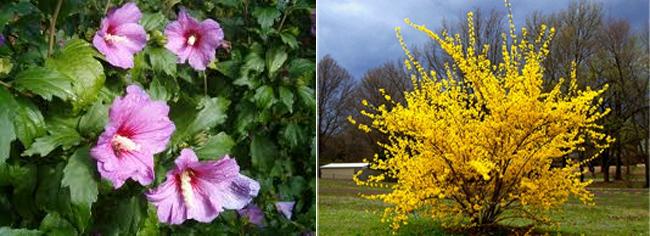 Poda De Arbustos De Flor Paisaje Libre - Arbustos-de-flor