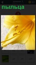 цветок желтого цвета с пыльцой внутри 800 слов 3 уровень