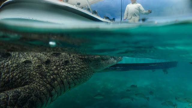 Over under photo crocodile