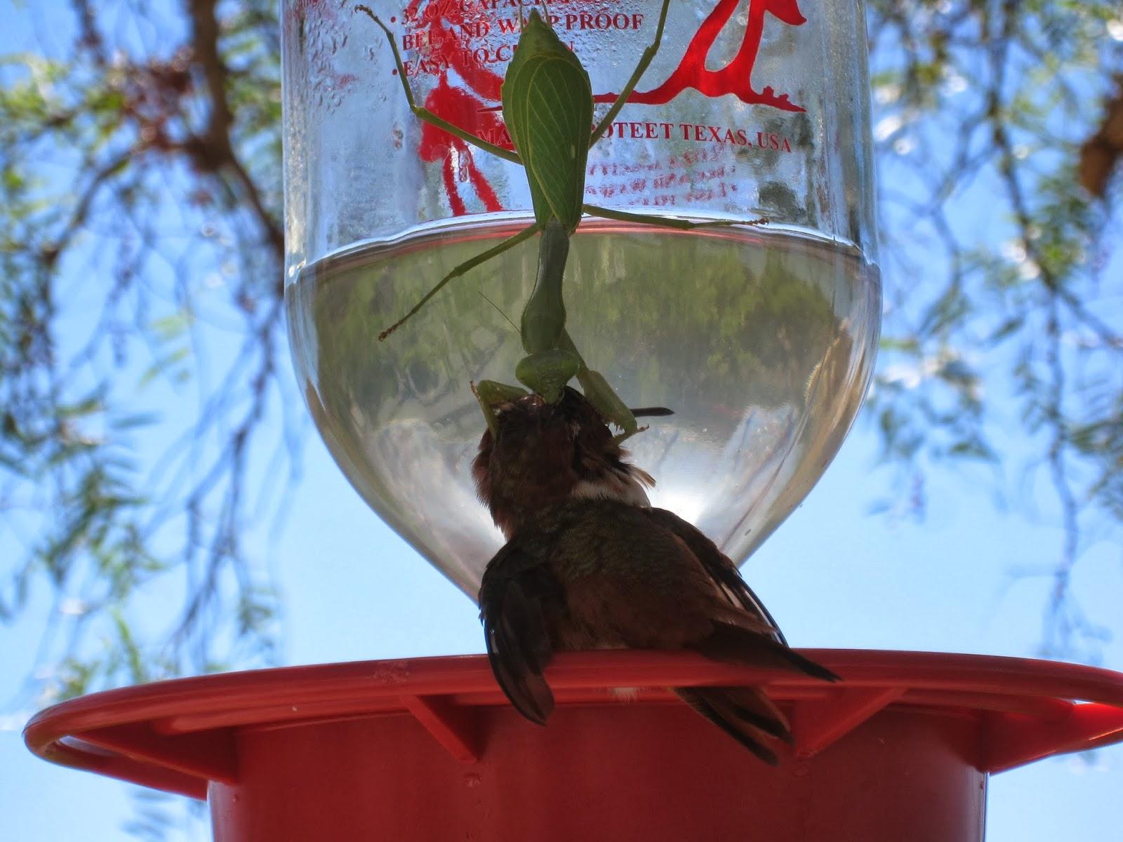 Fall Bird Feeder Wallpaper The Backyard Birder Praying Mantis Can Be A Threat To