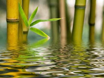 quand couper le bambou